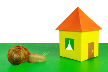 The snail and a paper house