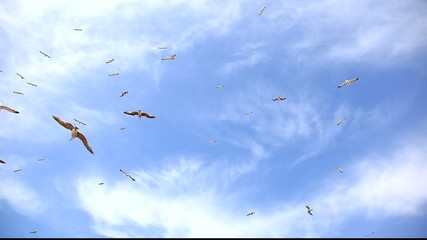 Flock of seagulls fly overhead over a blue sky