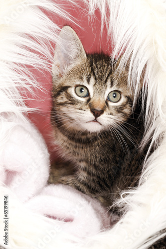 Hauskatze,Kätzchen im Korb, Porträt,Nahaufnahme