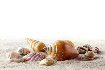 Sea shells on sand. Summer beach background.