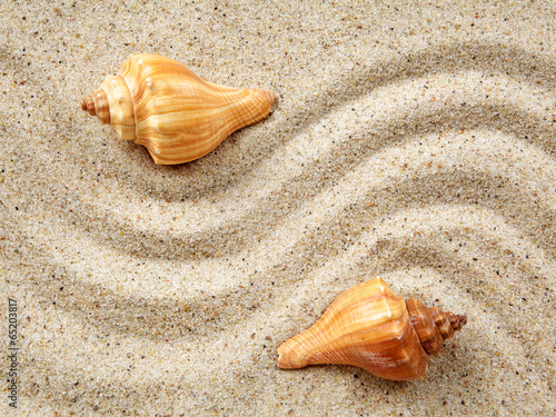 Sea shells on sand. Summer beach background. - 65203817