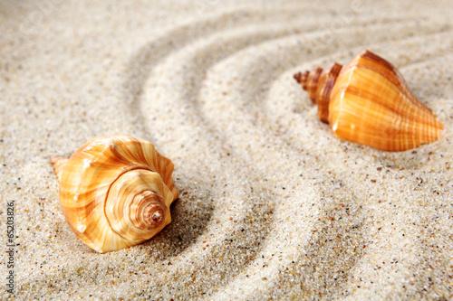 Sea shells on sand. Summer beach background. - 65203826
