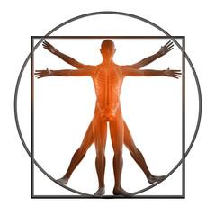 Anatomiestudio Da Vinci 3