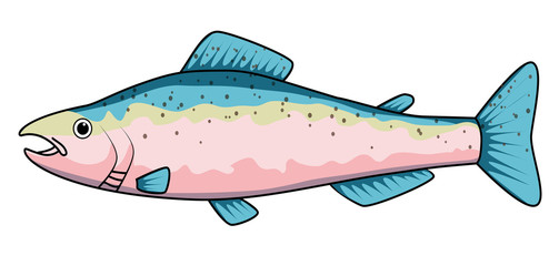 Cartoon drawing of a trout