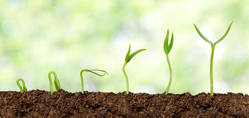 Plants growing from soil - Plant progress
