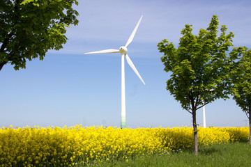 Windrad im gelben Rapsfeld