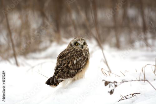 Aluminium Uil Short Eared Owl