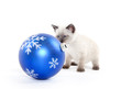 Cute kitten and ornament