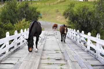 Caballos en el Puente de Lago Hess, Tronador, Bariloche
