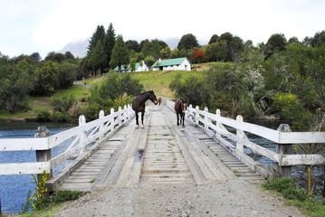 Caballos salvajes en el Lago Hess, Bariloche, Patagonia