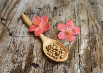 Heap coriander seeds in wooden spoon
