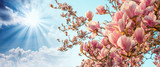 Magnolia tree blossom with colourful sky on background