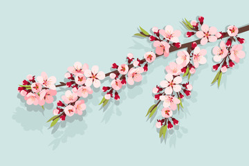 Pink cherry blossom on sky blue background
