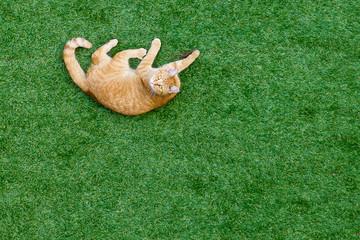 gatto che ha catturato una lucertola