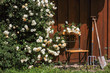 Gartenhütte mit Rosen, Stuhl und Werkzeug