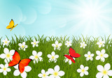 Fototapety Summer meadow with flowers and butterflies