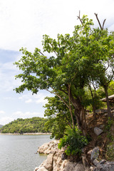 Trees growing on a hillside in lake islands, which are visible