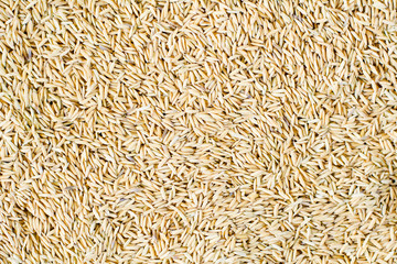 Background caused by a lot of rice.