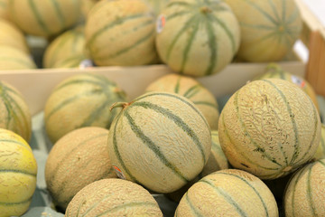 rayon des  melons