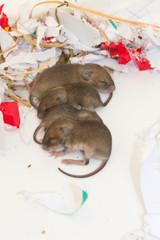 """Mäusenest """"In Reih und Glied"""""""
