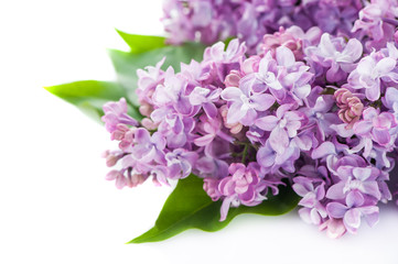 Floral background lilac flowers on white background