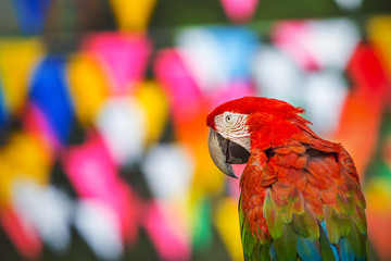 macaw parrots with colorful background