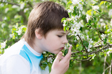 The boy at the apple blossom in the spring garden