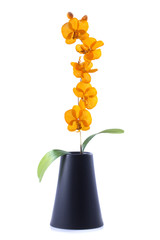 orange streaked orchid flower with leaf  in pot, isolated
