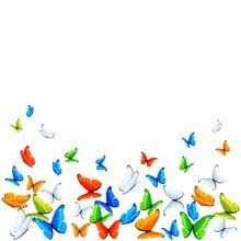 Papillons sur fond blanc.