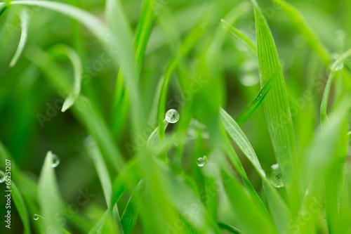 Schlaflied der Gräser