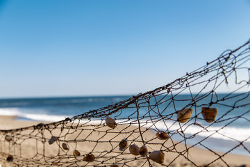 fishing net in beach with shells
