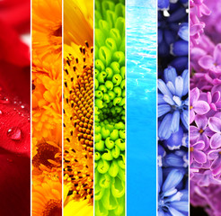 Collage of beautiful flowers and water