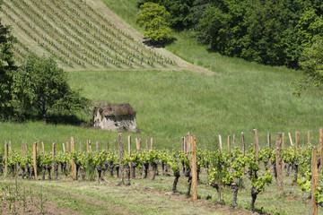 Vigne et coteaux