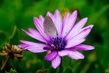 Mariposa posada sobre una flor