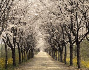 The image of beautiful scenery
