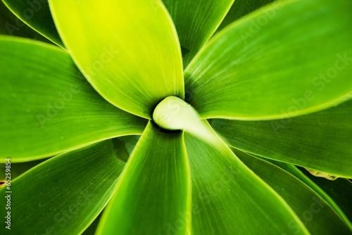 Cactus Macro Background