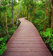 Chemin dans la jungle, Trang, Thaïlande