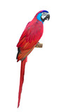 Red Macaw aviary poster