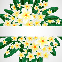 Floral design background. Plumeria flowers.
