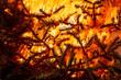 Christmas tree flaming, burning