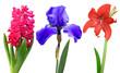 hyacinth iris lily