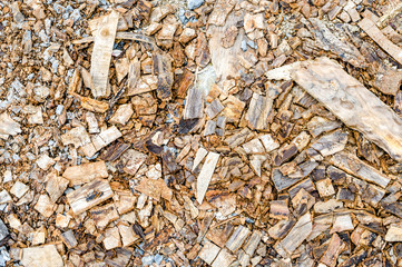 scraps of wood texture,bark wood