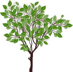 brown tree with large green leaves
