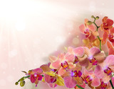 bright orchid flowers with pink strips on bright background