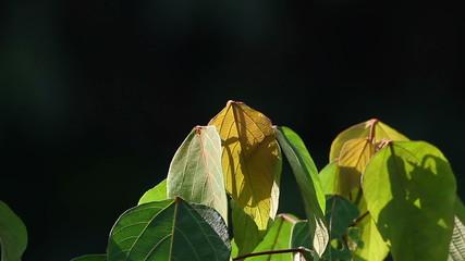 Jungle Flora 1