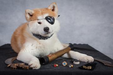 akita pirate