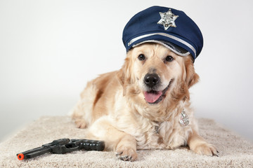 golden retriever policier