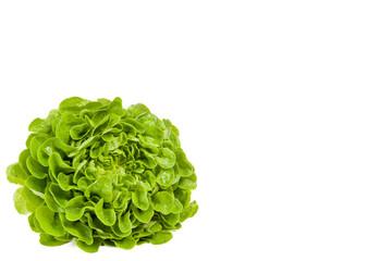 Kopfsalat liegend
