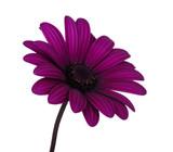 Fototapety flower