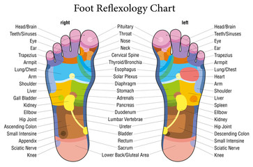 Foot reflexology chart description